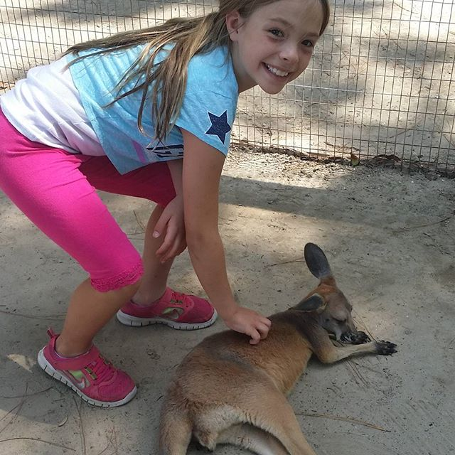 Encounter with a kangaroo at the Alabama Gulf Coast Zoo. zoo kangaroo AlabamaGulfCoastZoo